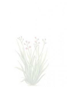eolesens-huile-vegetale-et-hydrolat-nice-tropique