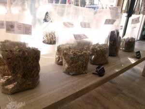 preparation-tisane-plantes-sechees-sur-mesure-nice